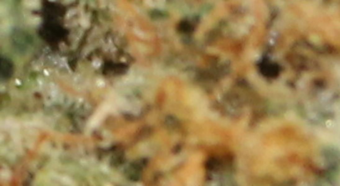 Platinum OG Kush - Top Shelf Medical Collective - Medical Marijuana