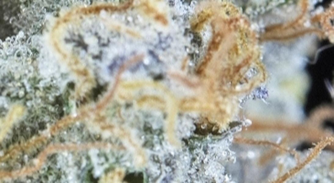 GMO Cookies - Green Walrus Delivery - Medical Marijuana Menu