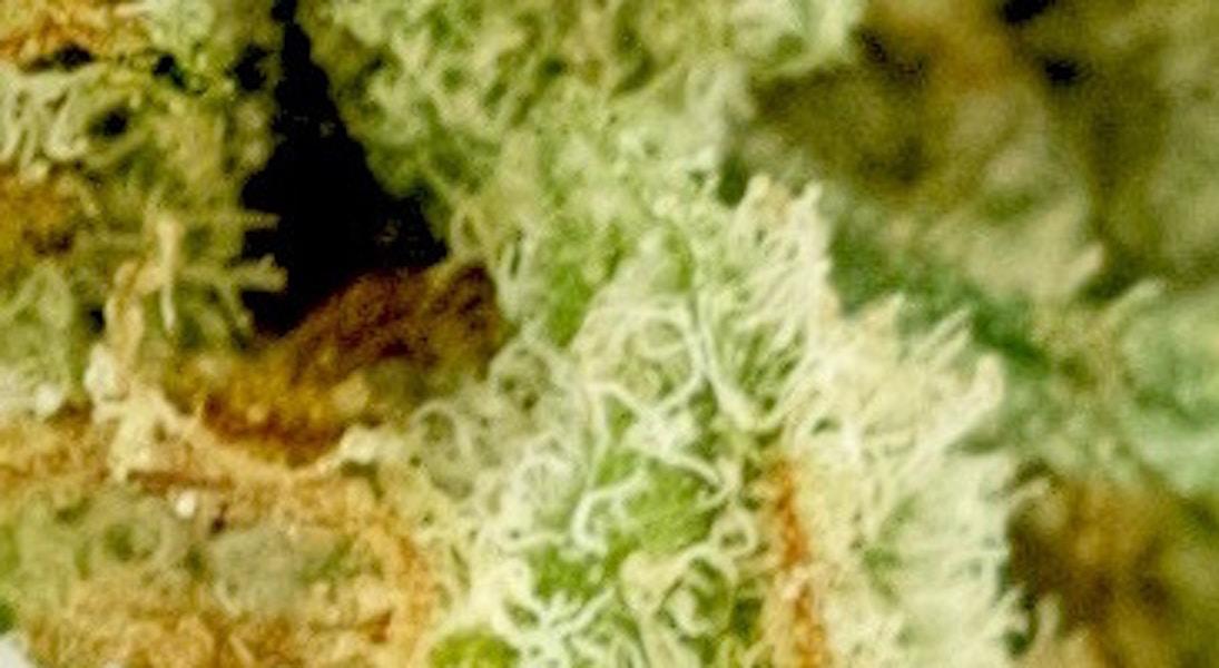 OG Malawi Haze - Herbal Alternatives - Medical Marijuana