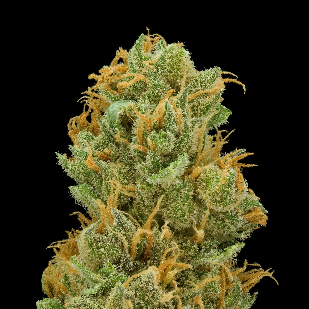 Tropical Punch - BIOCARE - Medical Marijuana Menu