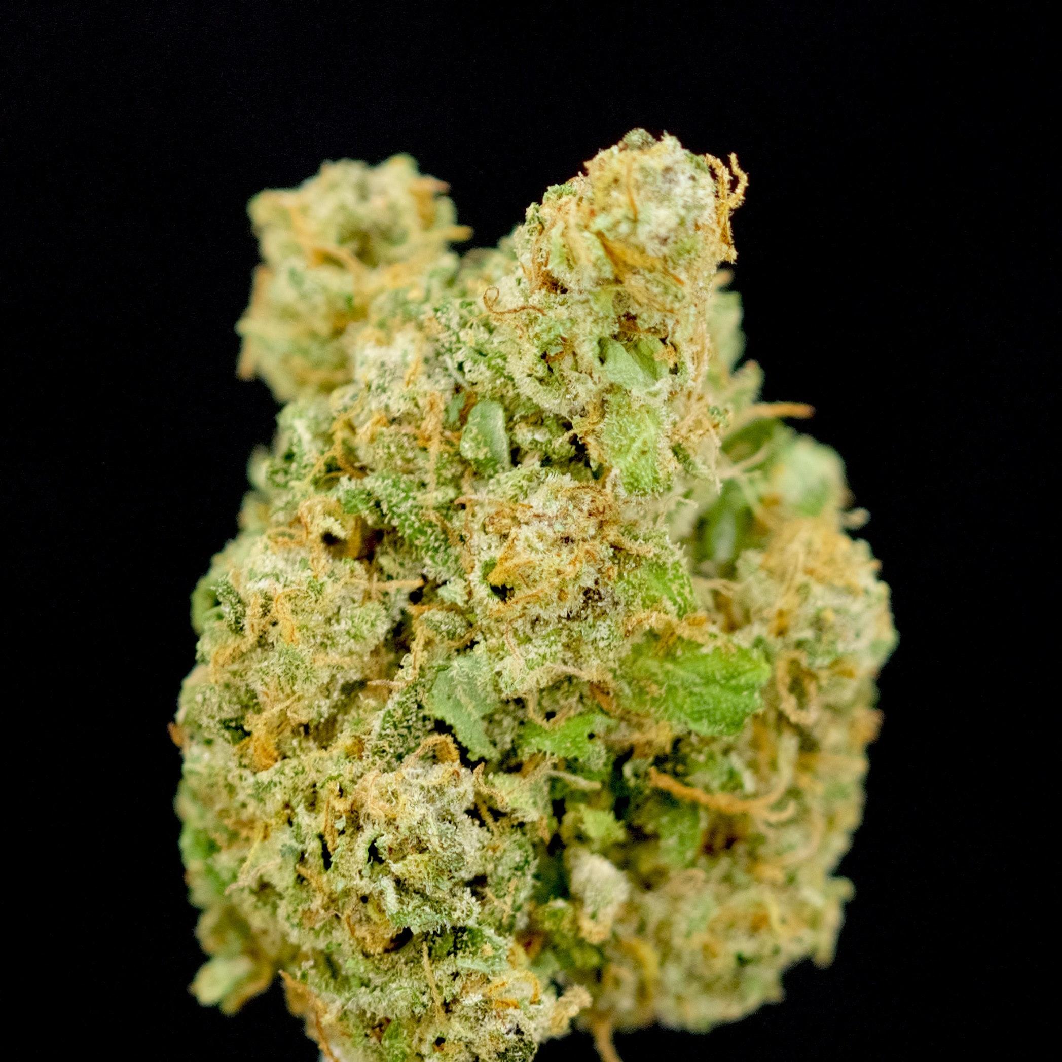 Cookie Drizzle - Herbal Alternatives - Medical Marijuana ...